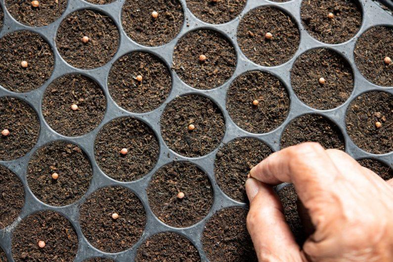 Jakie nasiona warzyw można wysiewać już w marcu?